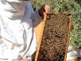 Arılarınızın Bakımı ve Bal sağımı Yapılır.